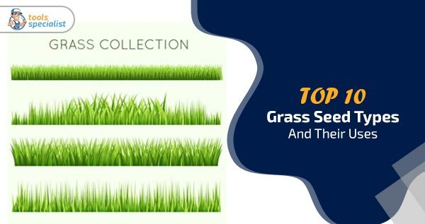Top 10 Grass Seed Types And Their Uses